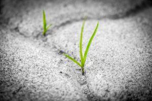 grass-1913167_960_720